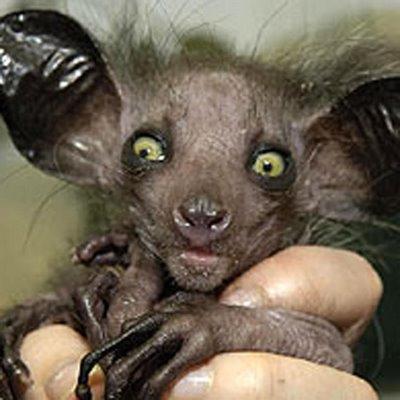 Animales: Los más raros y extravagantes.