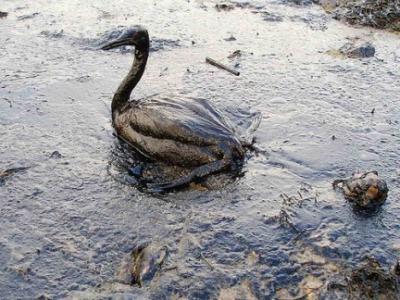 Vertido de crudo en el Golfo de México