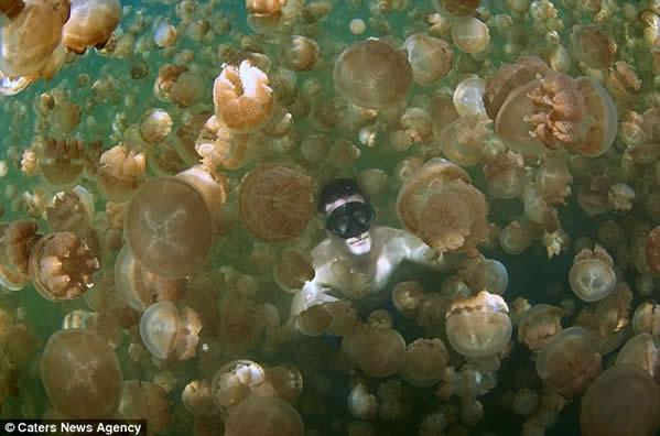Turistas valientes nadan con 8 millones de medusas