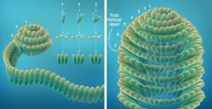 Desvelan la Estructura Tridimensional de un Virus Con Potencial Anticáncer y Anti-VIH