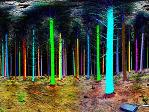Más madera talando menos árboles